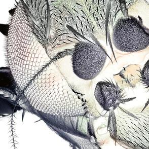 Fruit Fly Fabric