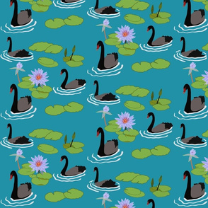 Black swans  & water lilies on Pelorous
