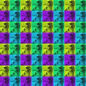 Stabby Dog