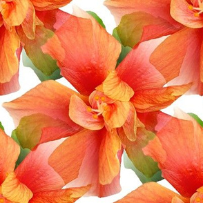 Burnt Orange Ruffled Hibiscus