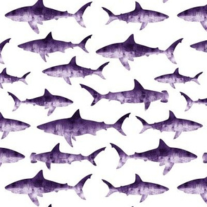 sharks - purple LAD19