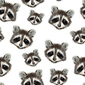 Raccoons - Smaller Scale