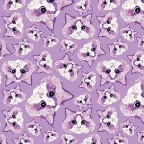 Purple Ragdolls