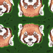 Red Pandas in the Forest