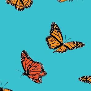 Orange Monarch Butterflies on Blue
