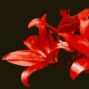 Red Lily Paint by Numbers