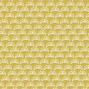 Apiaceae-2