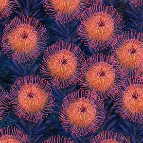 Pincushion Proteas on navy canvas 12""