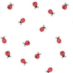 Ladybugs -  ladybird - red on white - LAD19
