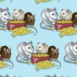 Fancy pet rats -blue