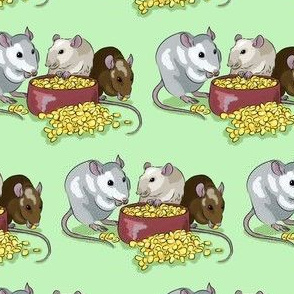 Fancy pet rats -green