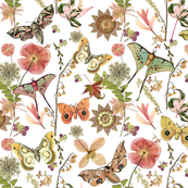 Moths n Flowers on White