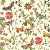 Moths on Mint w Flowers