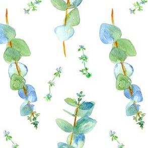 Eucalyptus and Thyme