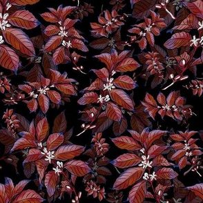Coffee Bean Plant Red