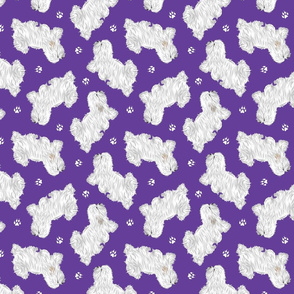 Trotting Coton de Tulear and paw prints - purple