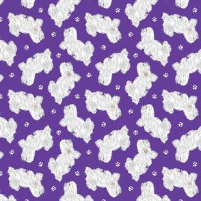 Trotting Coton de Tulear and paw prints - purple