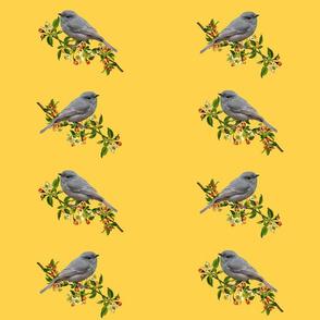 Season's Grey Strike-thrush #2 - mustard, large
