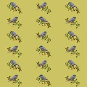 Season's Grey Strike-thrush #2 - pistachio, medium