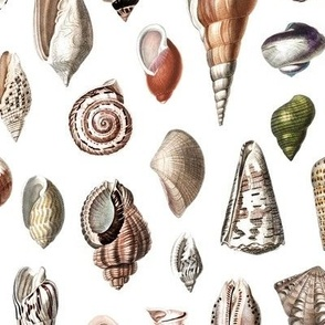 shells vintage colors