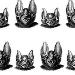 Batty friends in black and white