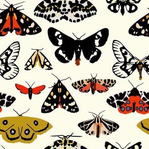 Moths - design challenge