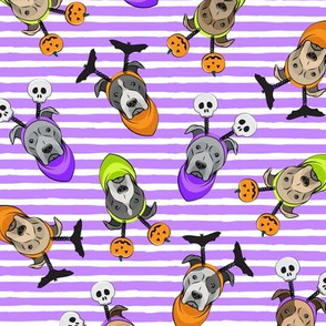 Halloween Pitties - Pit Bull Terrier - purple stripes  - LAD19
