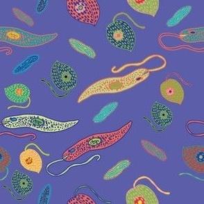 waterbugs-amoeba-layout2