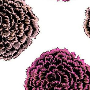 Pink round  flowers