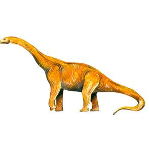 Happy Diplodocus - Large