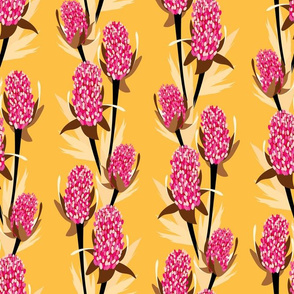 Pink Banksia_Yellow_2000px