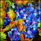 Grapes Large Scale