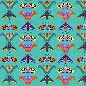 Moth Medley