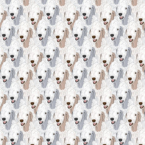 Bedlington Terrier portrait pack