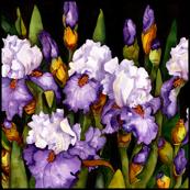 Bearded Iris Large Scale