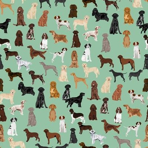 sporting dogs fabric - dog breeds fabric, sporting group fabric, dog breeds, dog, dogs - mint
