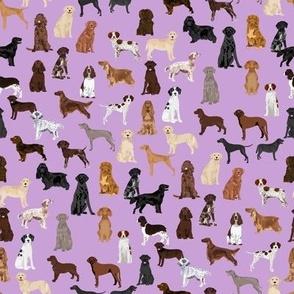sporting dogs fabric - dog breeds fabric, sporting group fabric, dog breeds, dog, dogs - purple
