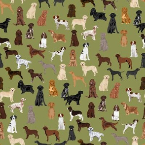 sporting dogs fabric - dog breeds fabric, sporting group fabric, dog breeds, dog, dogs - green