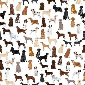 sporting dogs fabric - dog breeds fabric, sporting group fabric, dog breeds, dog, dogs - white