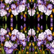 Bearded Iris Abstract Pattern