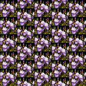 Bearded Iris Mini Scale