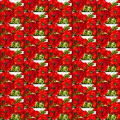 Bold Poppies Mini Scale