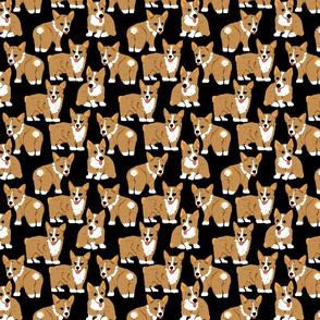 Corgi Pup Mlems