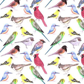 Various birds watercolor- budgie cardinal goldfinch titmouse kingfisher cedar waxwing juncos