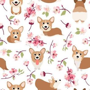 """9'"""" Corgi in spring florals fabric, cherry blossom sakura in asia, white"""