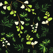 forest ferns (black)