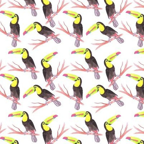 Keel billed Toucan or Ramphastidae sulfuratus bird seamless watercolor birds painting