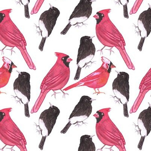 Cardinals and black phoebe watercolor repeat art