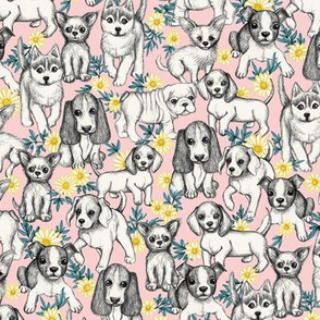 Dogs and Daisies on Millenial Pink