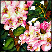 Pink Rhodies Medium Scale